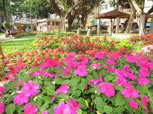 Garden-201303260853142364